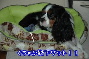 DSC_0123_convert_20110916225430.jpg
