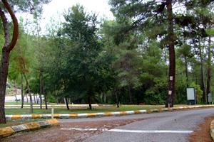 ファセリス遺跡への分岐点