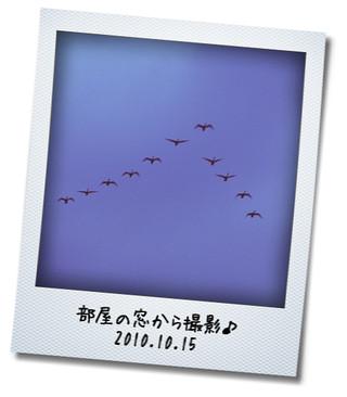 白鳥 2010.10.15