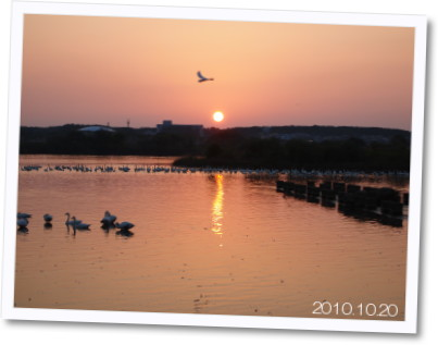 白鳥2010.10.20