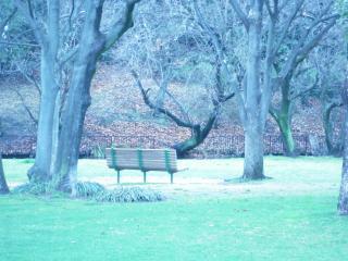 雨の公園ベンチ小