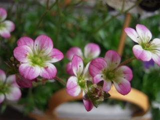 雨の日の花小2