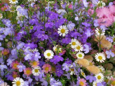 なんばパークス満開花