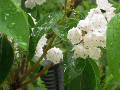 なんばパークス白い花