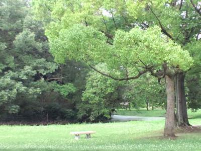 雨上がりの大仙公園20100712小1