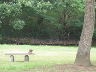 大仙公園日本庭園20100807 001小