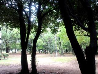 大仙公園ぎんなん20100916 02小