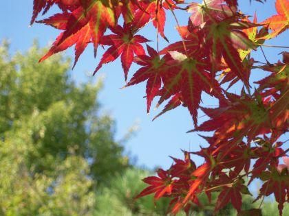 大仙公園20101017 012_420