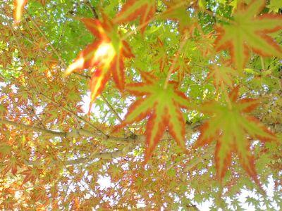 大仙公園日本庭園20101018 2_400