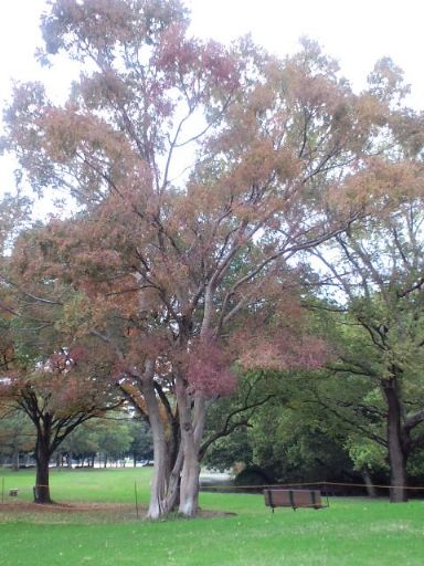 大仙公園20101108_512