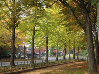 秋の日本庭園・大仙公園 003_400