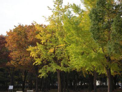 秋の日本庭園・大仙公園 002_400