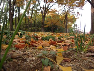 秋の日本庭園・大仙公園 005_400