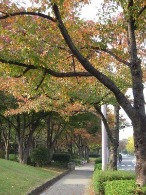 秋の日本庭園・大仙公園 001_400