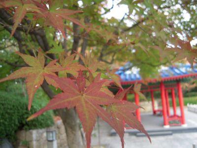 秋の日本庭園・大仙公園 015_400