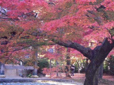 京都・南禅寺真如堂・永観堂 038_400