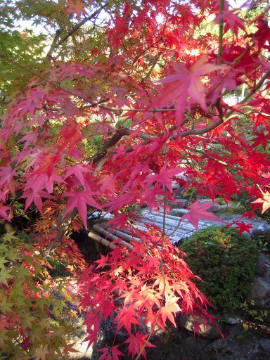 京都・南禅寺真如堂・永観堂 029_512