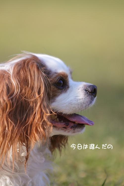 IMG_5216.jpg