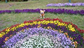 s- つるみ花壇