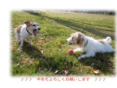 s-DSCN0158_20110113155428.jpg