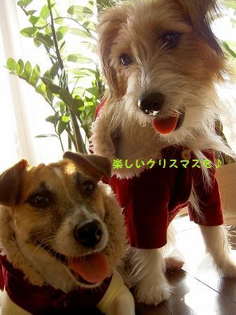 s-PICT78332009.jpg