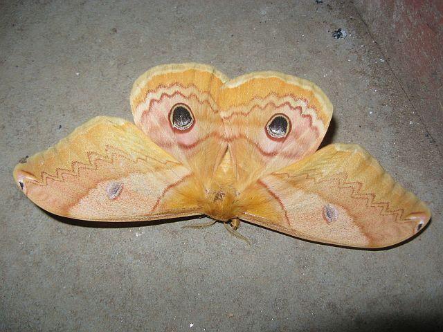 Moth_5480_1.jpg