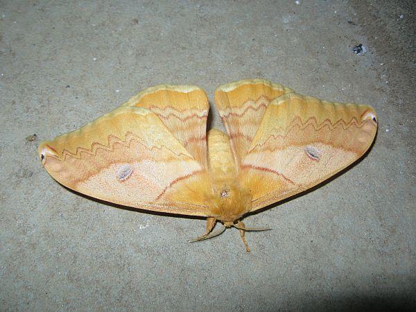 Moth_5490_2.jpg