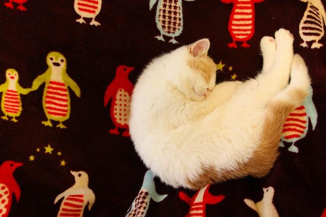夢見るネコ ジャム