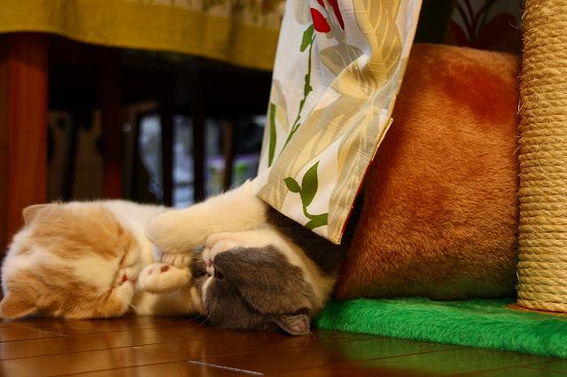 ネコの攻防