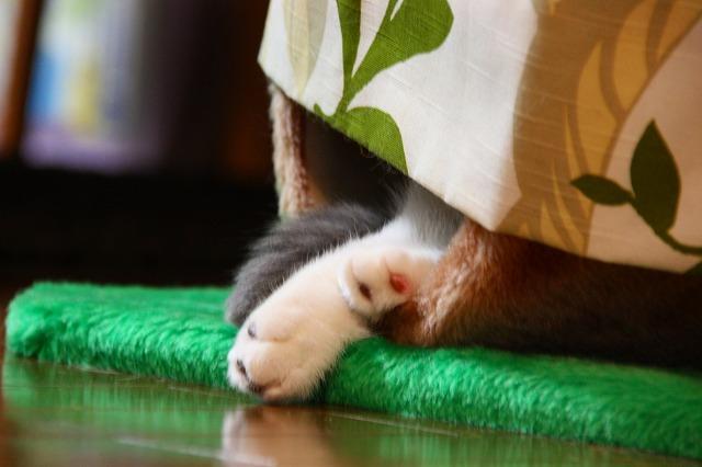 ネコのマイホーム