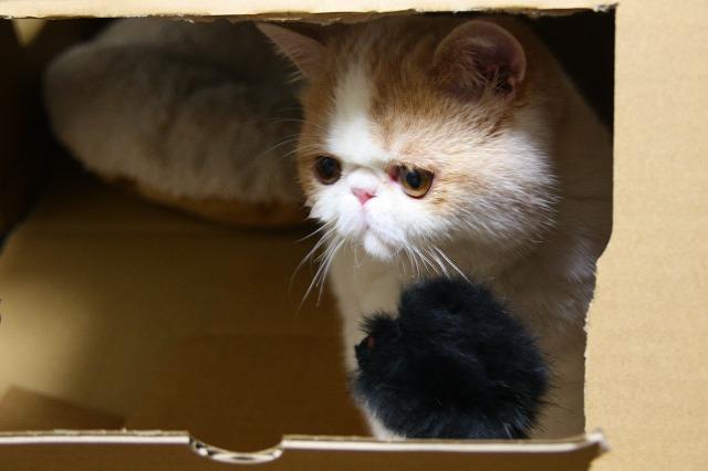 と言いつつただの空き箱