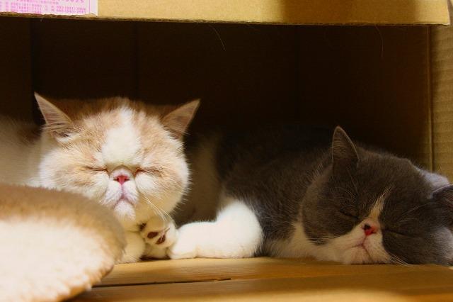 箱ネコ兄弟