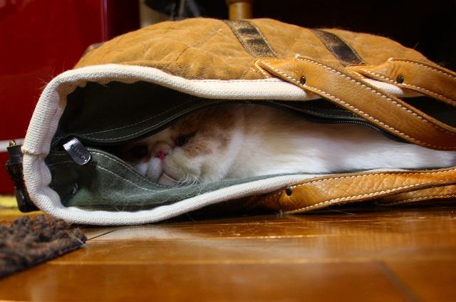 旅行鞄にねこ