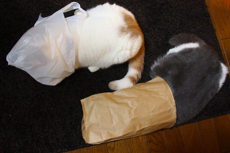 変な猫2匹