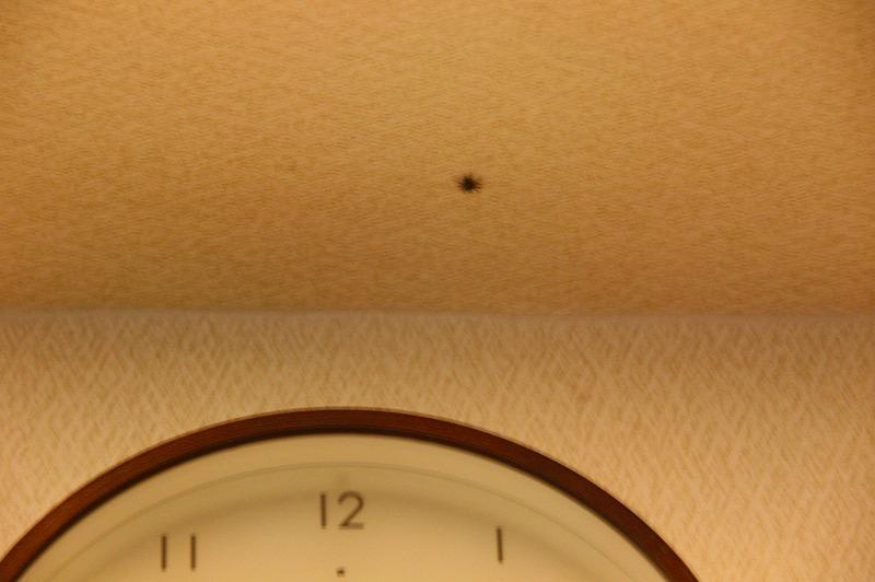 見つめられるクモ