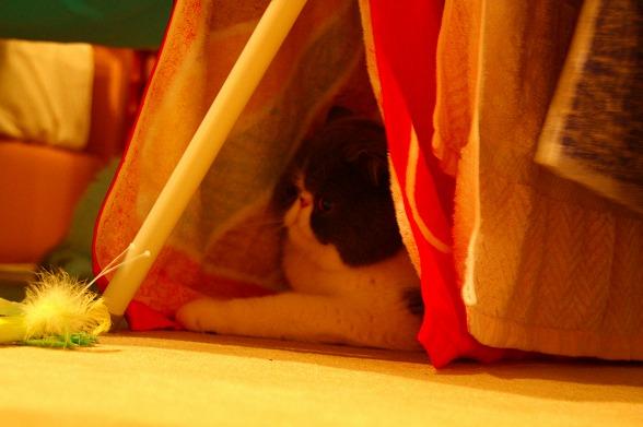 くまの隠れ家
