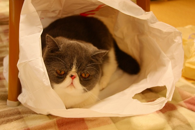 袋の中のくま2