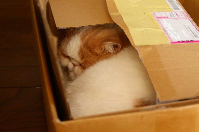 箱入りジャムちゃん
