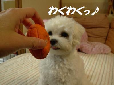 蟆冗伐螳カ蜀咏悄鬢ィ+344_convert_20091116233520