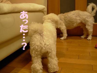 蟆冗伐螳カ蜀咏悄鬢ィ+369_convert_20091116234233