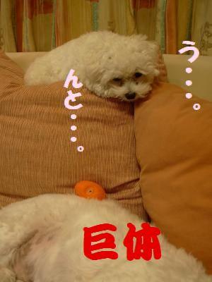蟆冗伐螳カ蜀咏悄鬢ィ+361_convert_20091116233945