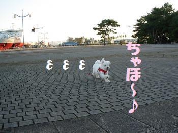蟆冗伐螳カ蜀咏悄鬢ィ+447_convert_20091123224926