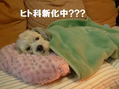 蟆冗伐螳カ蜀咏悄鬢ィ+568_convert_20091127235524