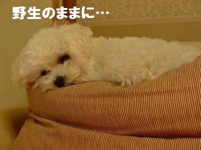 蟆冗伐螳カ蜀咏悄鬢ィ+570_convert_20091127235642