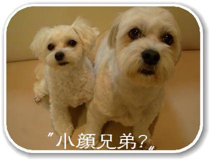 蟆冗伐螳カ蜀咏悄鬢ィ+897_convert_20091213223210