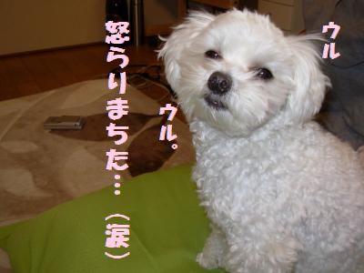 蟆冗伐螳カ蜀咏悄鬢ィ+1193_convert_20100112201913