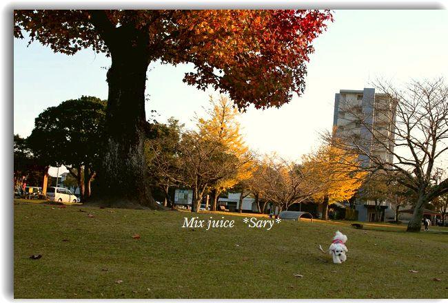 IMG_3634.jpg