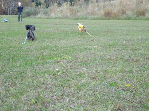snap_chapuco_2011112184738.jpg