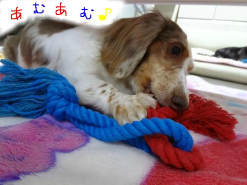 snap_chapuco_2011113173134.jpg