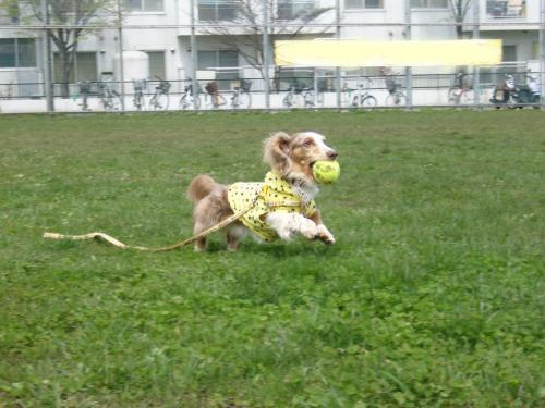snap_chapuco_20115317715.jpg